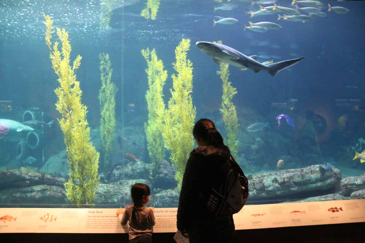 Julie and Tahia checking out one of the larger tanks showcasing sharks and other big fish