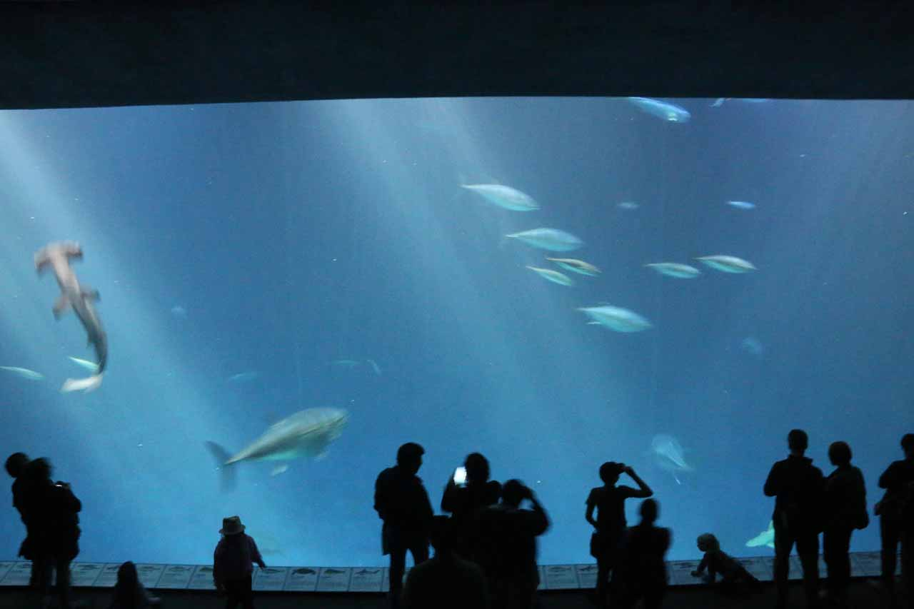 Another large tank with sharks and other big fish, but this time there were two stories of viewing decks
