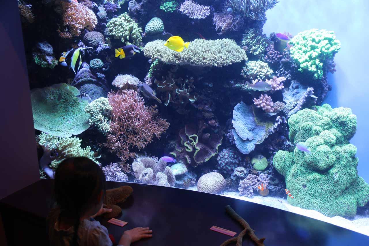 Tahia finally getting her Nemo fix