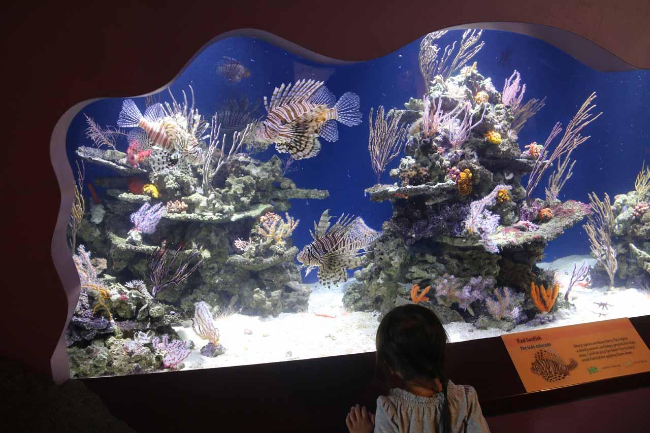 Tahia checking out some more reef life
