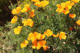Monterey_081_04242019