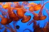 Monterey_Bay_Aquarium_012_03192010