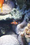 Monterey_Bay_Aquarium_040_03192010