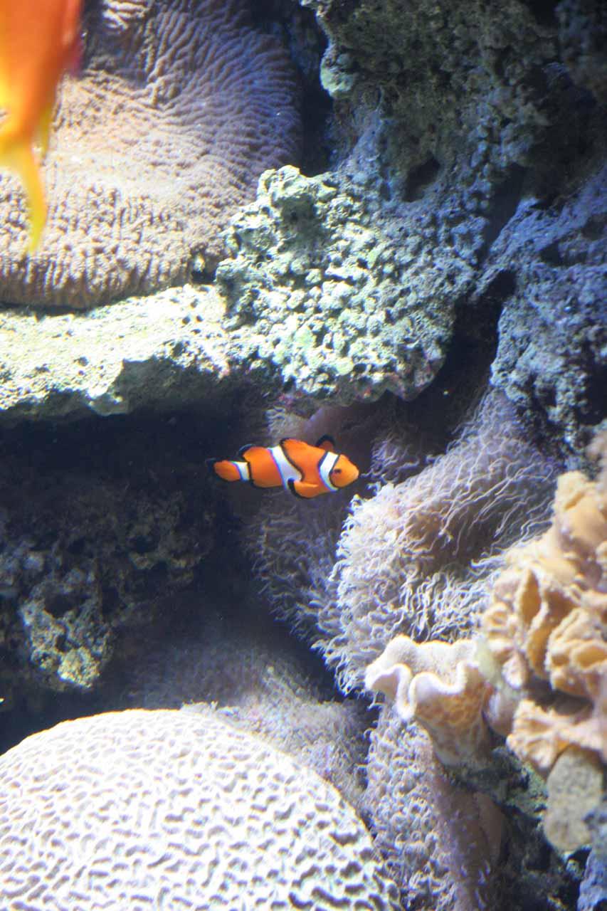 Nemo, again!
