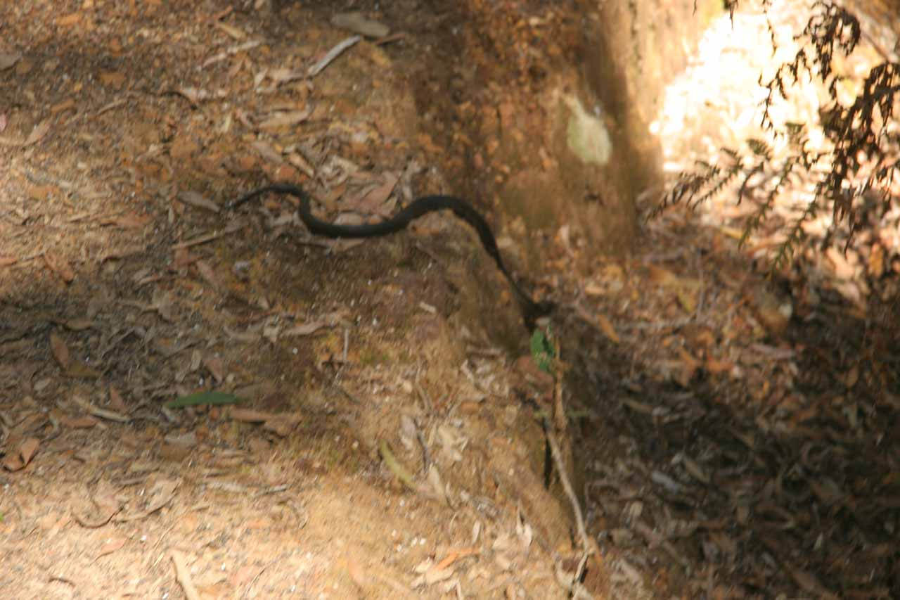 We saw this little snake along the trail somewhere near the half-way point