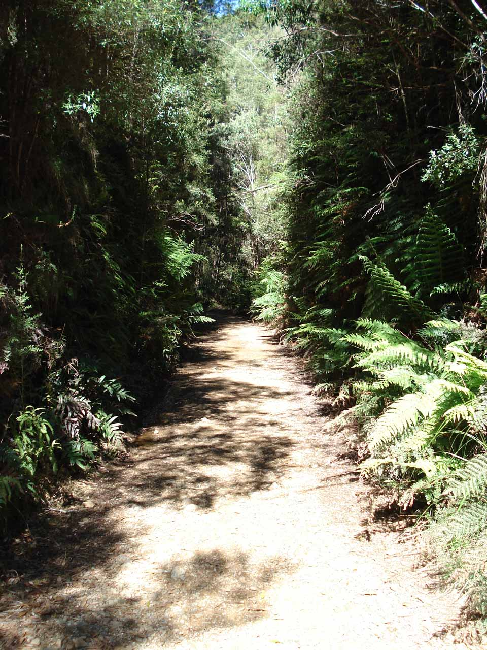 Even though it was warm and sunny during our visit, the Montezuma Falls Track was still flanked by ferns suggesting that this would ordinarily be an area of high rainfall