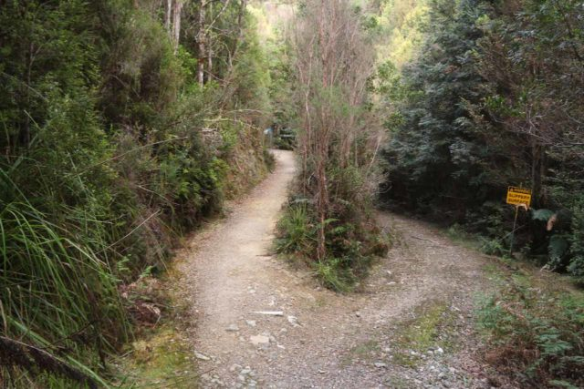 Montezuma_Falls_17_008_11292017 - Every once in a while, we saw splits in the Montezuma Falls Track like this, where the narrower path was for foot traffic while the wider path on the right was for 4wd traffic. These typically occurred at bridged creek crossings