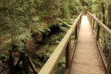 Montezuma_Falls_17_043_11292017 - A footbridge that was bypassing an eroded and older footbridge to the left of it