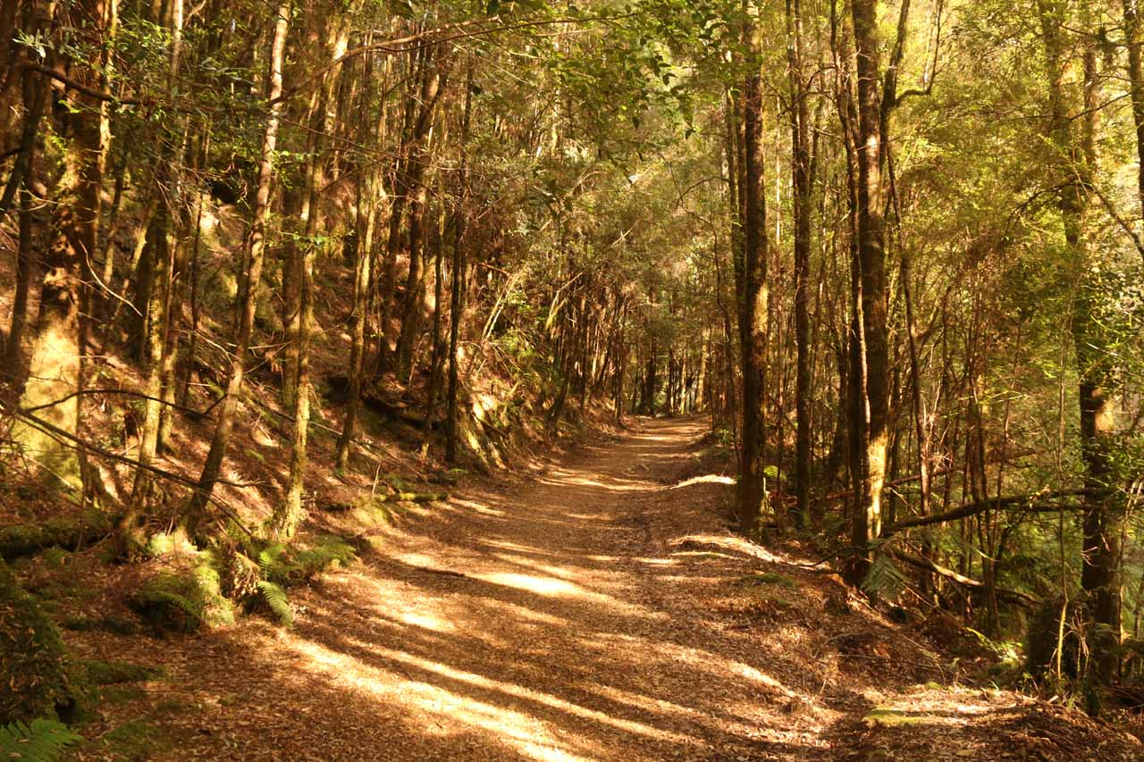 When the sun came out, there was still ample shade along the Montezuma Falls Track