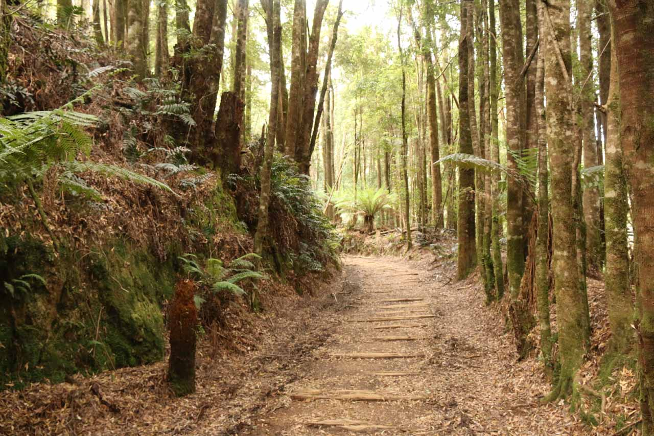 There were definitely more wooden planks on the Montezuma Falls Track throughout the walkers only portion