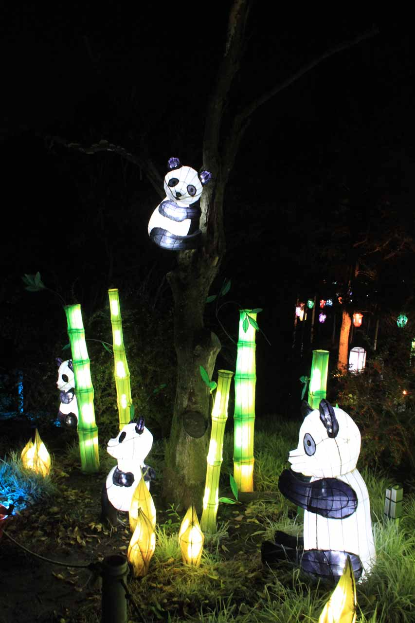 A lit up panda display