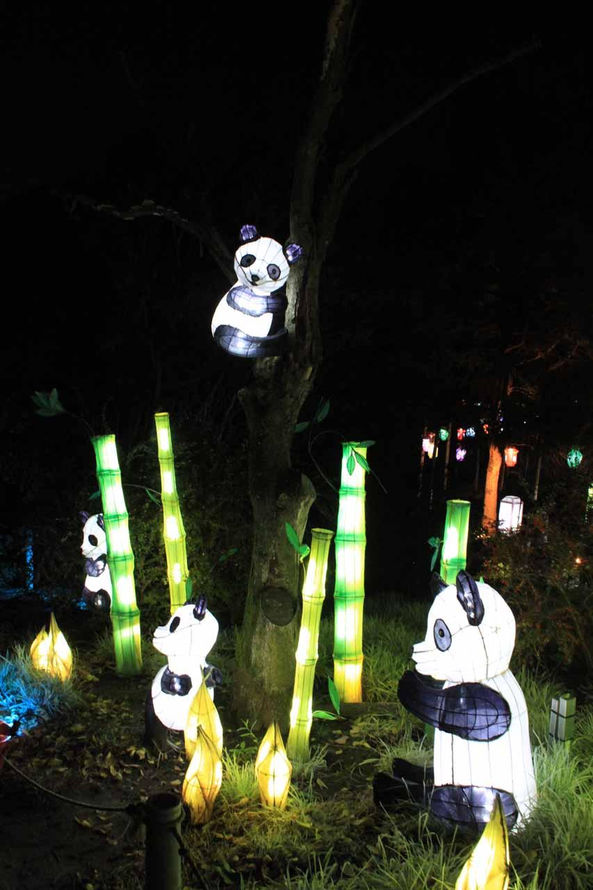 A lit up panda display