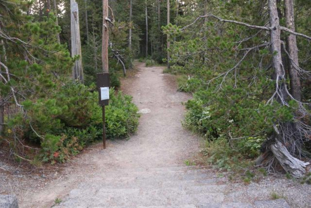 Moose_Falls_17_001_08112017 - The short trail leading down from the South Entrance Road to the base of Moose Falls
