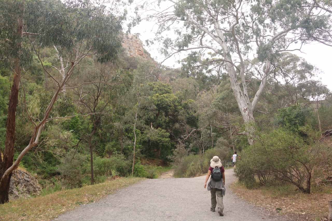 Julie on the very wide and well-developed track to the first of the Morialta Waterfalls surrounded by white-barked gum trees and other native flora