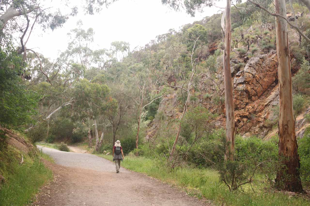 The further we went on the Morialta Valley Walk, the more the cliffs were closing in