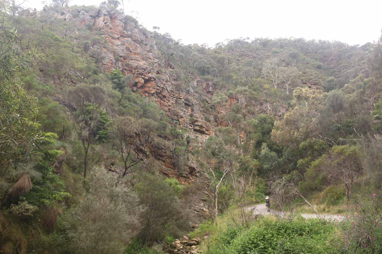 Julie about to round a bend beneath tall red cliffs that had closed in on the valley just as we were getting near the first of the Morialta Waterfalls