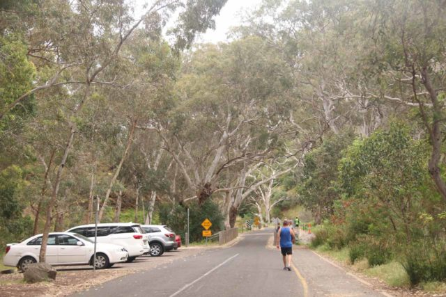 Morialta_Falls_128_11102017 - Looking back at the parking spaces along the Morialta Road, which was actually further set back from the actual trailhead meaning that the hike was extended due to the closest spaces being taken up