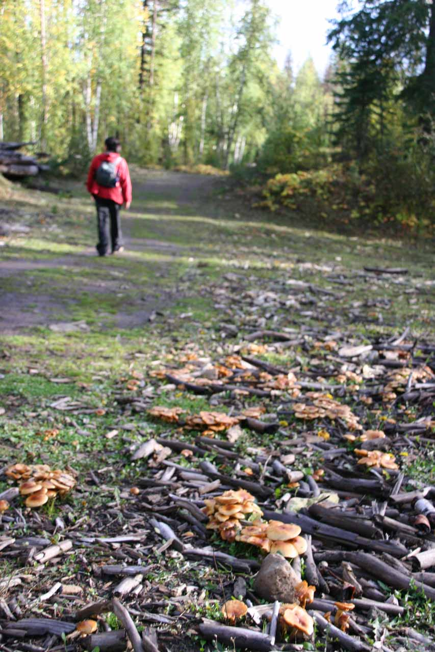 Passing by some mushrooms en route to the trailhead