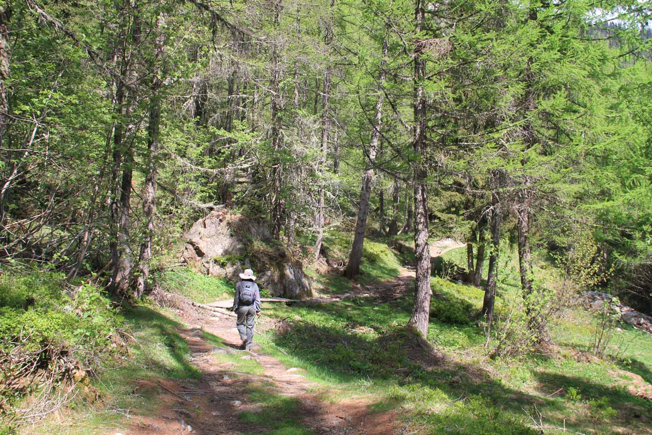 The trail starts becoming forested past the chalets