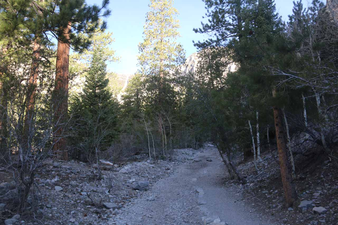 Initially, the Mary Jane Falls Trail gently ascended along this fairly wide trail following alongside a dry wash