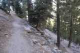 Mt_Charleston_040_04222017 - Ascending one of several switchbacks as the Mary Jane Falls Trail gained most of its 1100ft ascent in these zig-zags