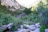 Mt_Charleston_235_08112020 - Continuing the stream scramble up the wash to Big Falls, where I was increasingly encountering boulders, deadfall, and stinging nettle during my August 2020 hike
