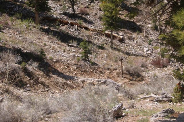 Mt_Charleston_387_04222017 - Looking across the wash at an easy-to-miss sign near the Echo Trailhead, which led me in the direction of Little Falls