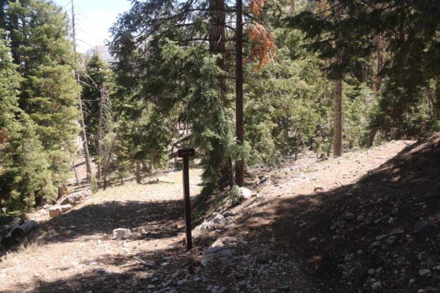 Mt_Charleston_400_04222017 - This signed pole was one of the confusing sections where the steeply ascending path on the right degenerated into a very steep scramble up to Cathedral Rock and it did not take me to the Little Falls
