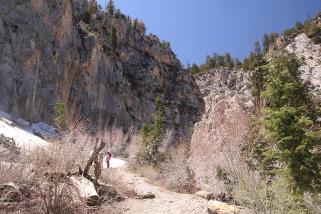 Mt_Charleston_407_04222017 - After making a right at the next unsigned trail junction, I hiked the final stretch up the canyon leading towards the Little Falls, but I also had to deal with a lot of snow deeper into that canyon