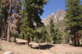Mt_Charleston_463_04222017 - Continuing on the return hike as I was coming back from Little Falls in late April 2017