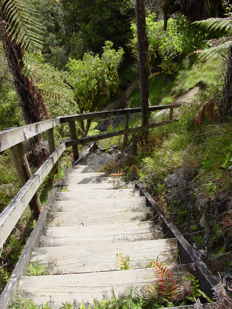 Going down the wooden steps to reach the Mt Damper Falls lookout platform