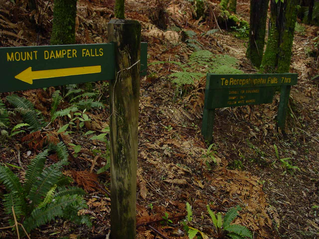 The signposted junction of the Mt Damper Falls Track and the Te Rerepahupahu Falls Track