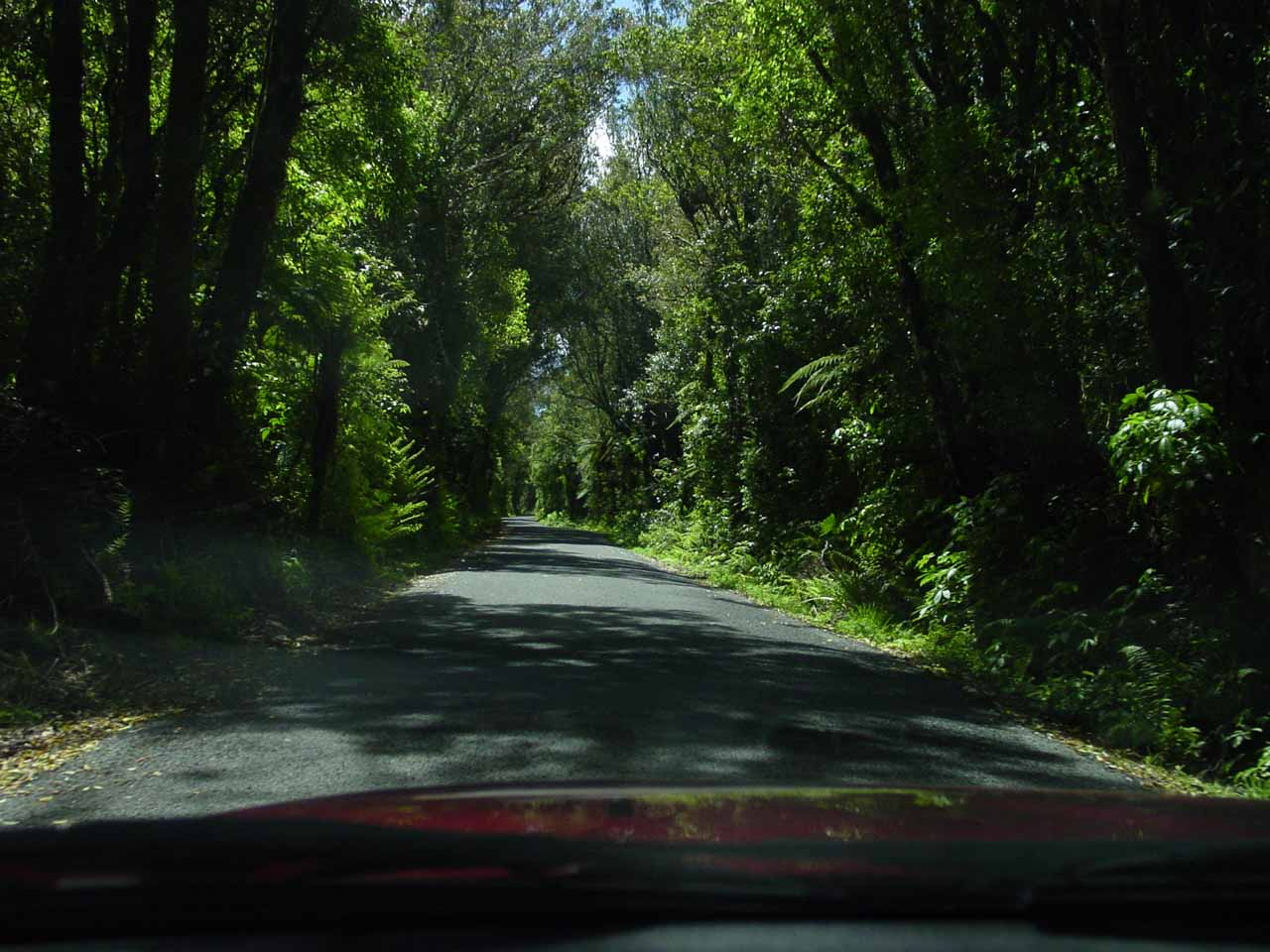 On a narrow road taking us up towards the Dawson Falls Visitor Centre for Egmont National Park