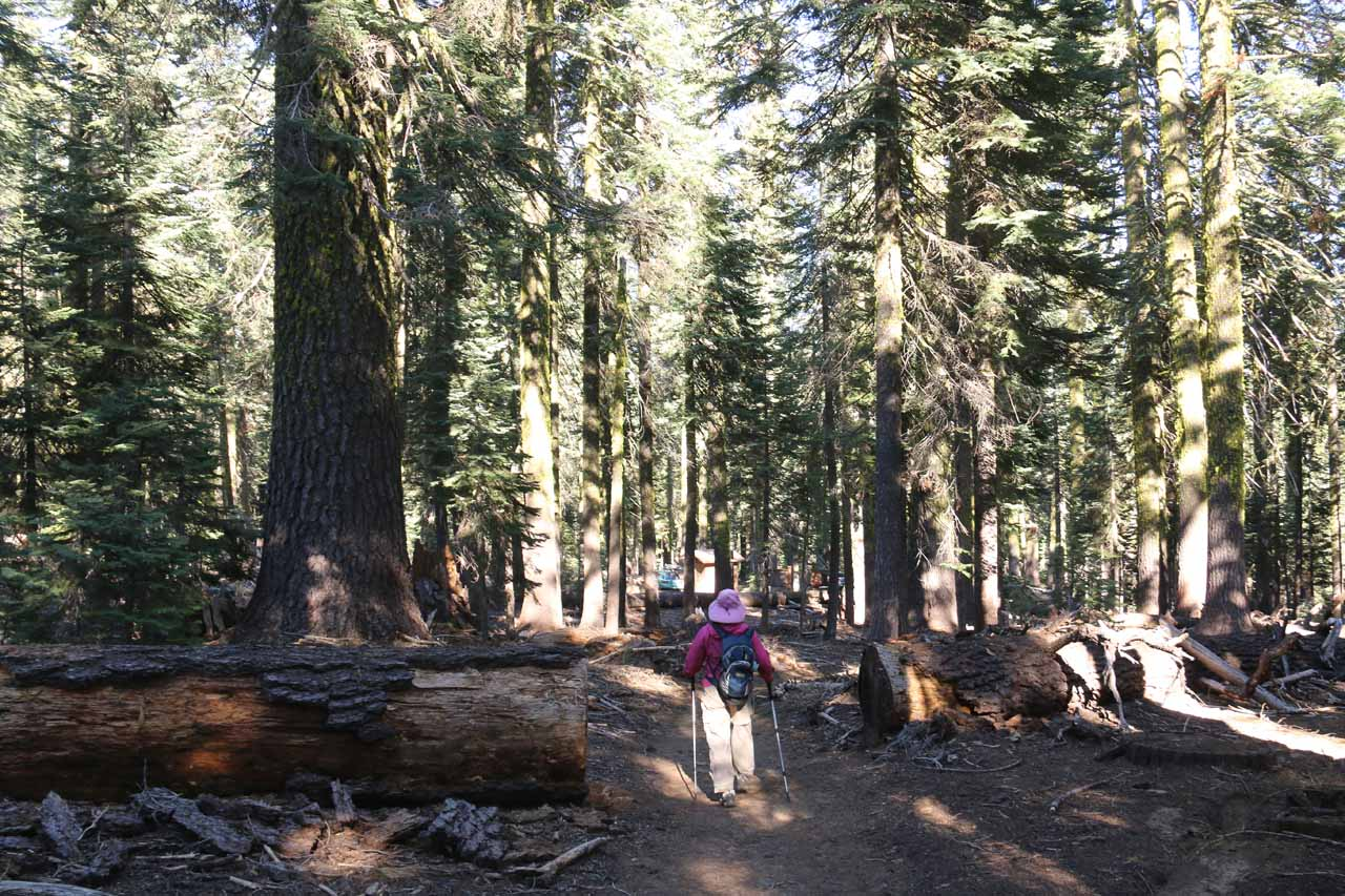 Approaching the end of the hike as we could start to see the Clear Creek Trailhead between the trees