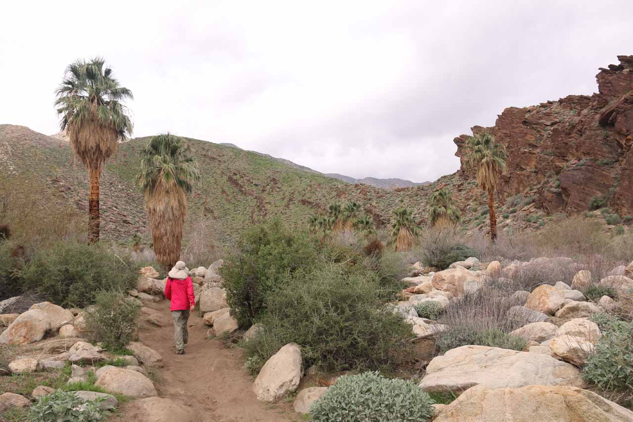 Continuing along the Seven Sisters Falls Trail between the first and second crossings