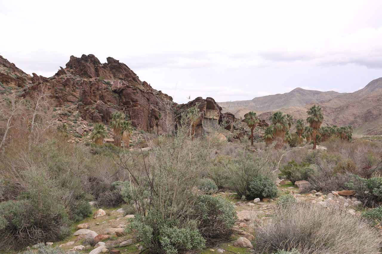 Looking downstream towards the rocks and palm trees near the first stream crossing