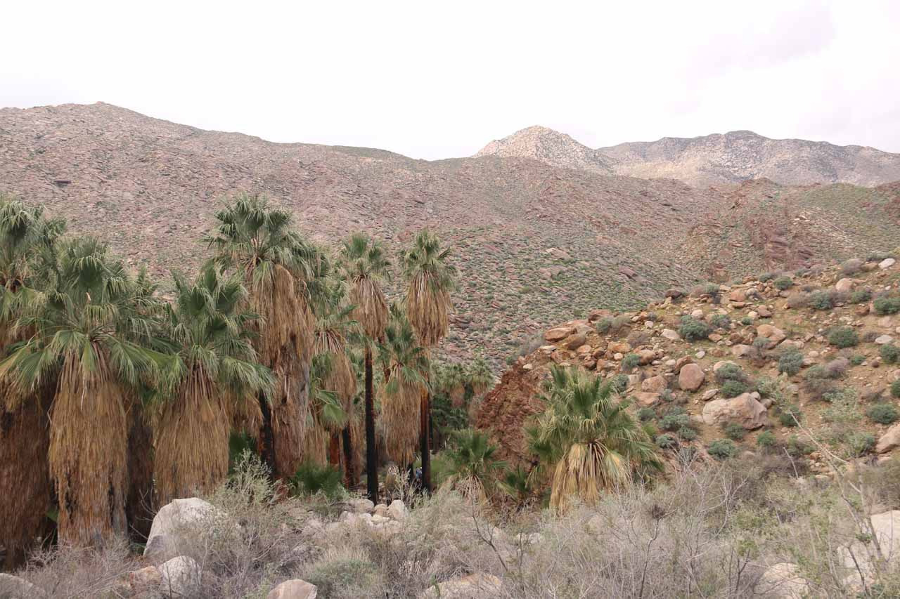 Despite the soggy adventure, we had to pause and take in the beautiful landscape of the San Jacinto Mountains backing Murray Canyon's palm trees