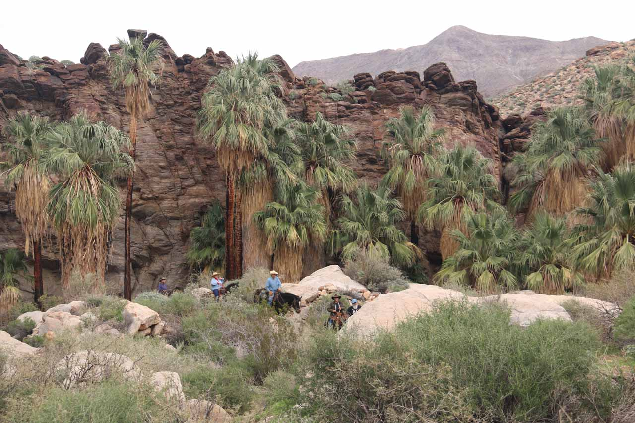 Looking back at Murray Canyon as a large horseriding group about coming up upon us