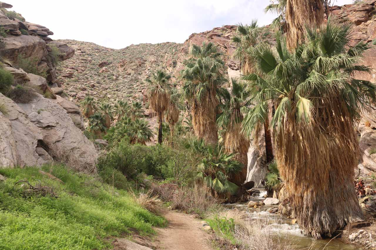 Continuing beyond the first major waterfall to go deeper into Murray Canyon