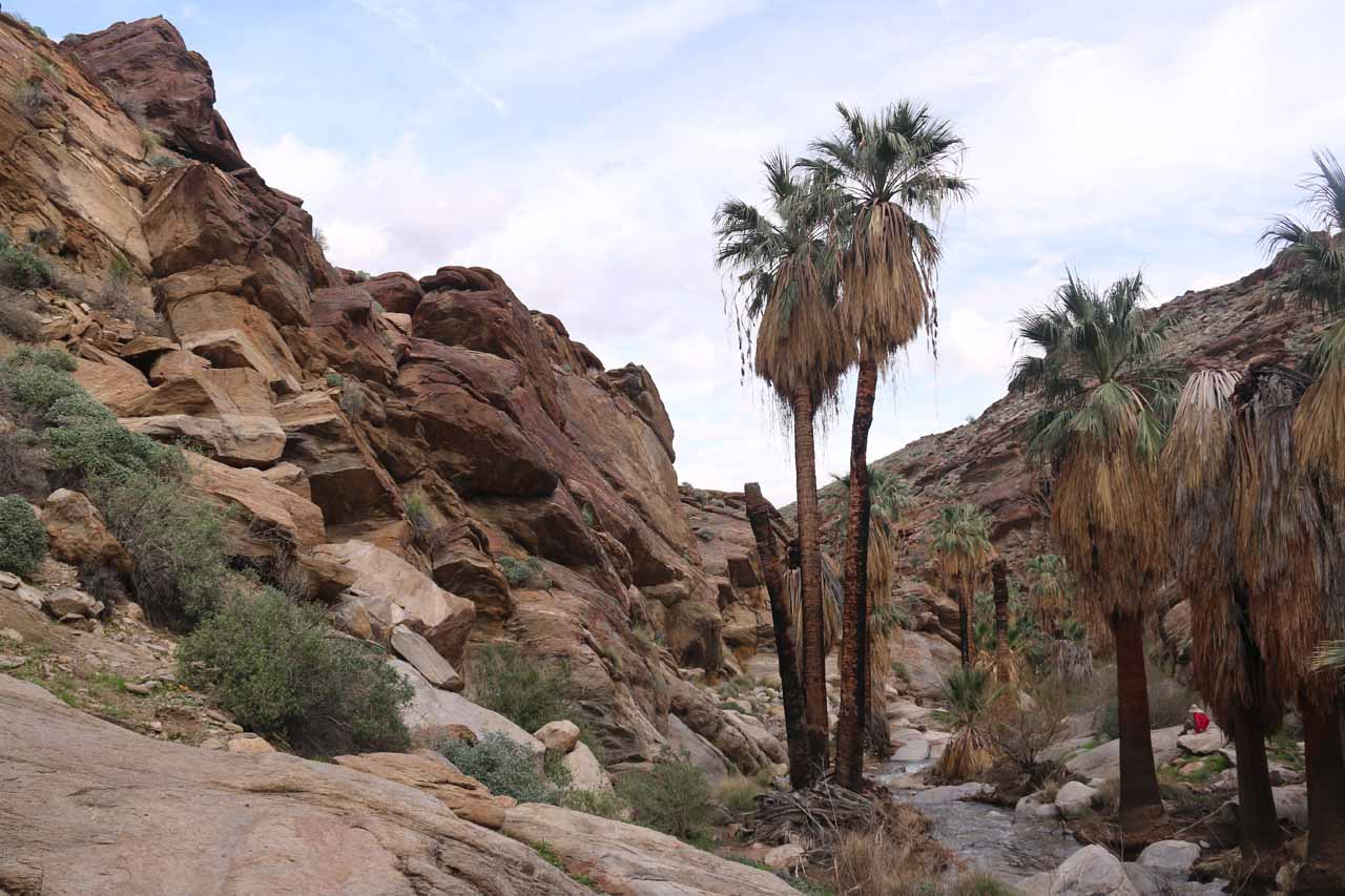 After having our fill of the Murray Canyon Falls, we continued hiking downstream