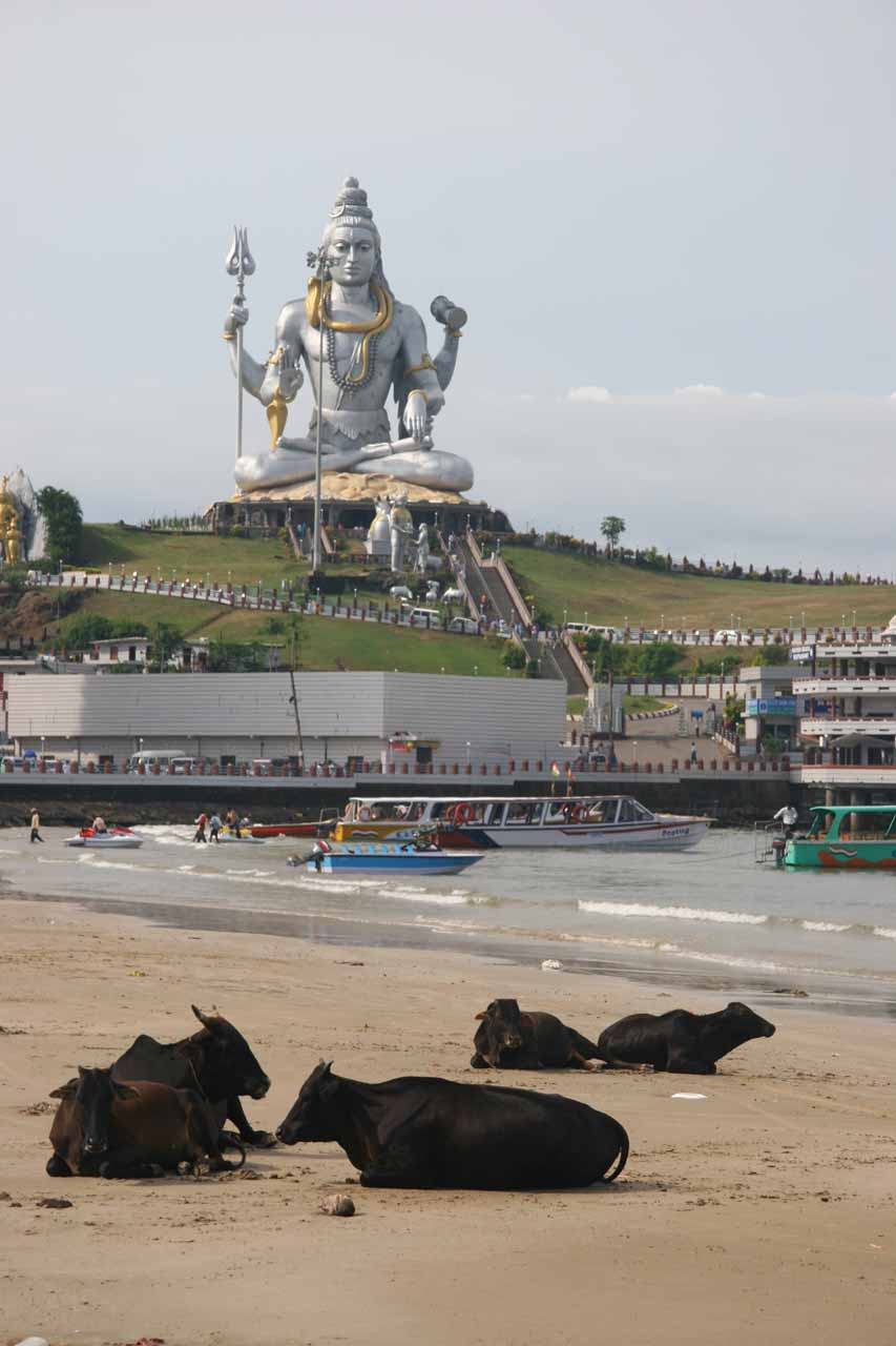 The Shiva statue fronted by cows on the beach at Murudeshwar