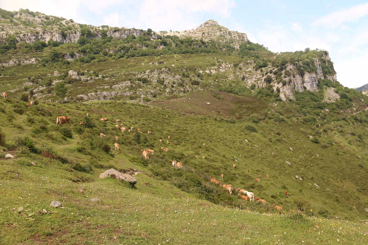 Looking left from the uppermost mirador towards some cows grazing at the head of the valley