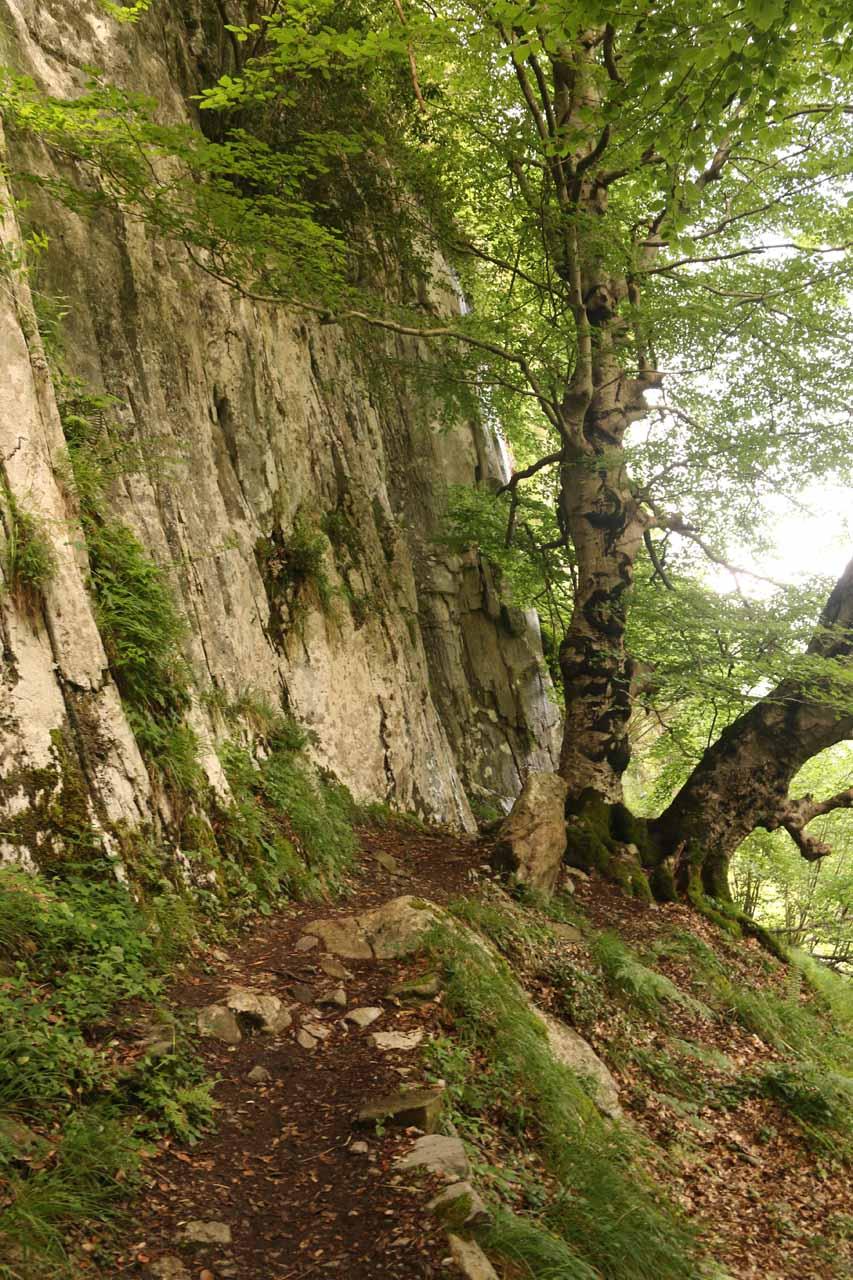 The fairly rough trail leading closer to the base of Nacimiento del Rio Ason
