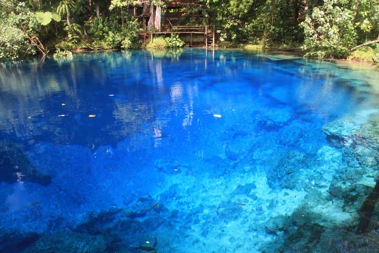 Gorgeous blue color at the Nanda Blue Hole on Espiritu Santo Island