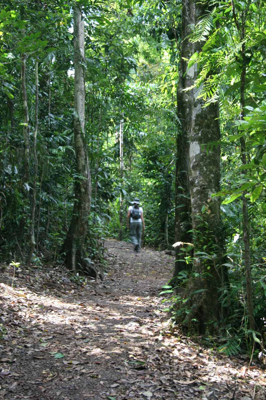 Julie on the path to Nandroya Falls