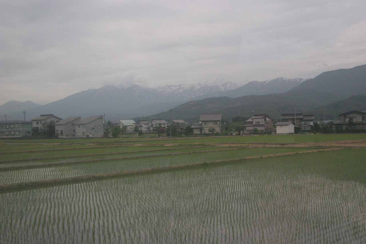 Rice fields before the Japan Alps