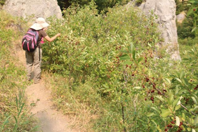 Natural_Bridge_Falls_058_08092017 - Julie managing to find more huckleberries to pick along the trail to the overlook of the Natural Bridge Falls