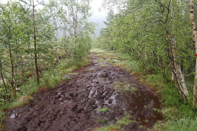 Naustafossen_031_07152019 - Lots of muddy patches on the trail leading away from the Myrvangvegen tractor road towards the Nauståfossen waterfall