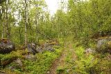 Navitfossen_085_07052019 - The trail climbing through some lush sections as I was pursuing Røykfossen