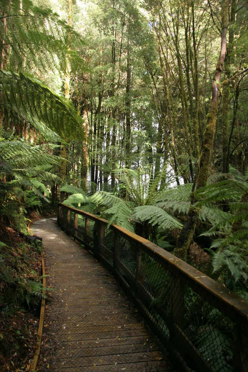 Pleasant stroll within the cool, temperate rainforest